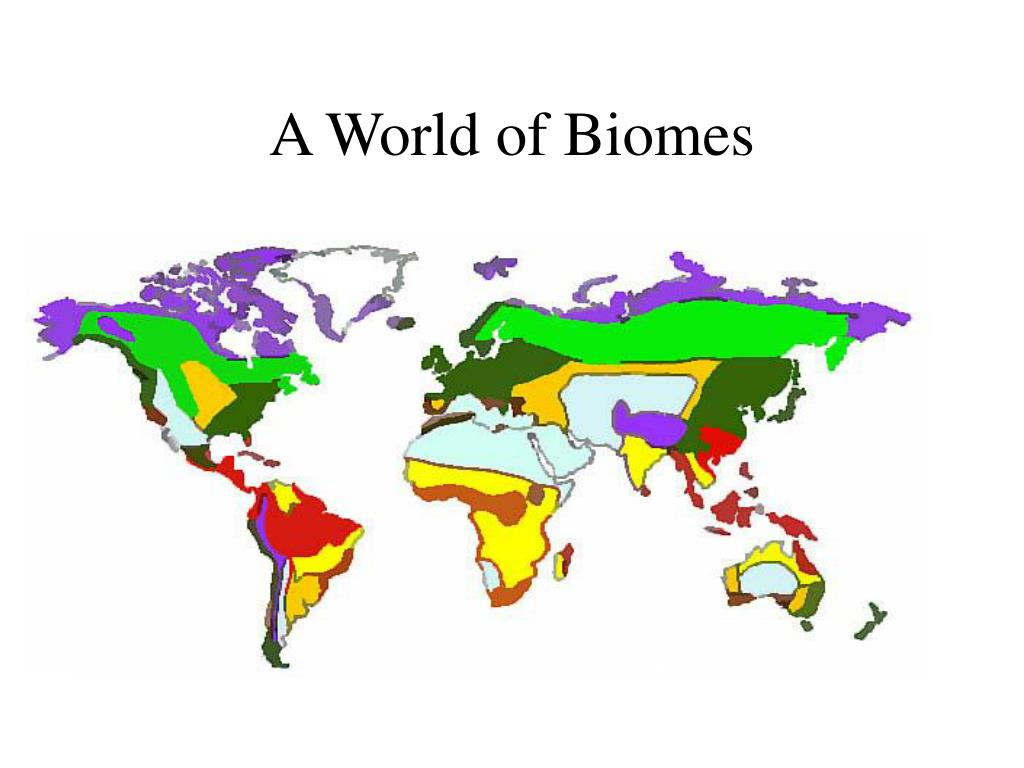 A World of Biomes