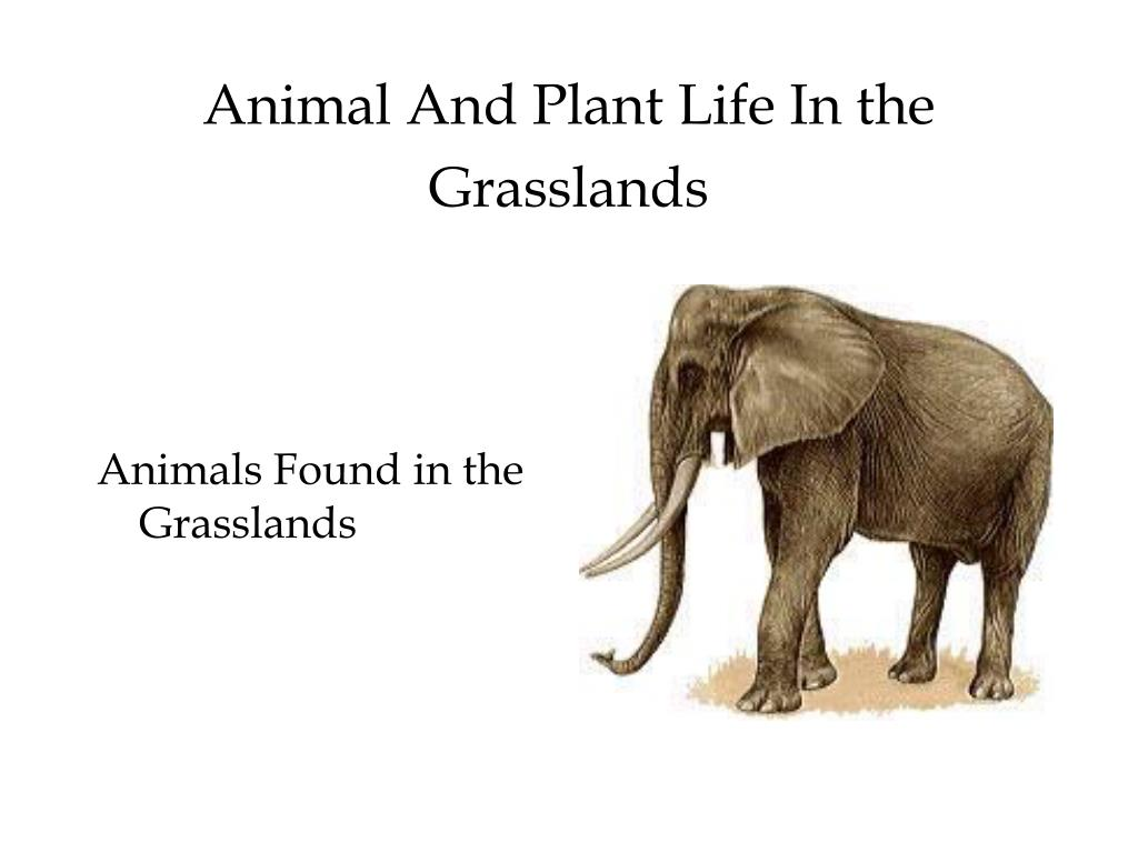 Animal And Plant Life In the Grasslands