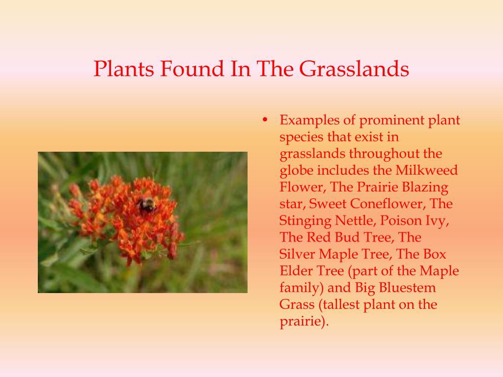 Plants Found In The Grasslands