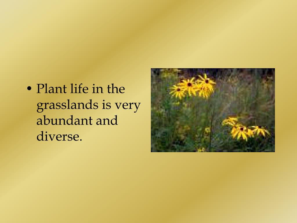 Plant life in the grasslands is very abundant and diverse.
