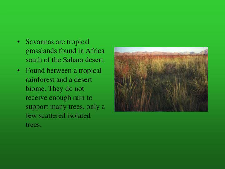 Savannas are tropical grasslands found in Africa south of the Sahara desert.