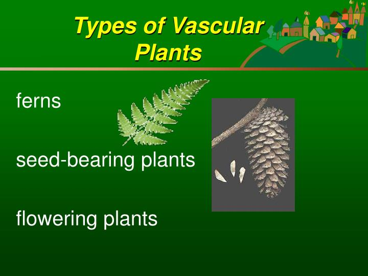 Types of vascular plants