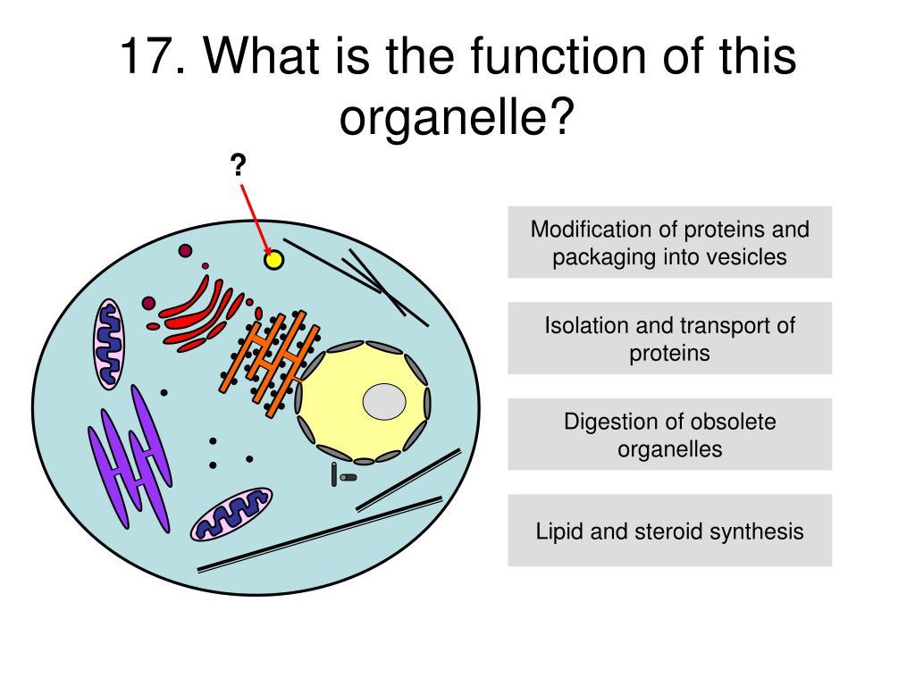 describe and explain the role of 7 describe the role of an expression vector expression vector cloning vector an   describe the polymerase chain reaction (pcr) and explain the advantages.