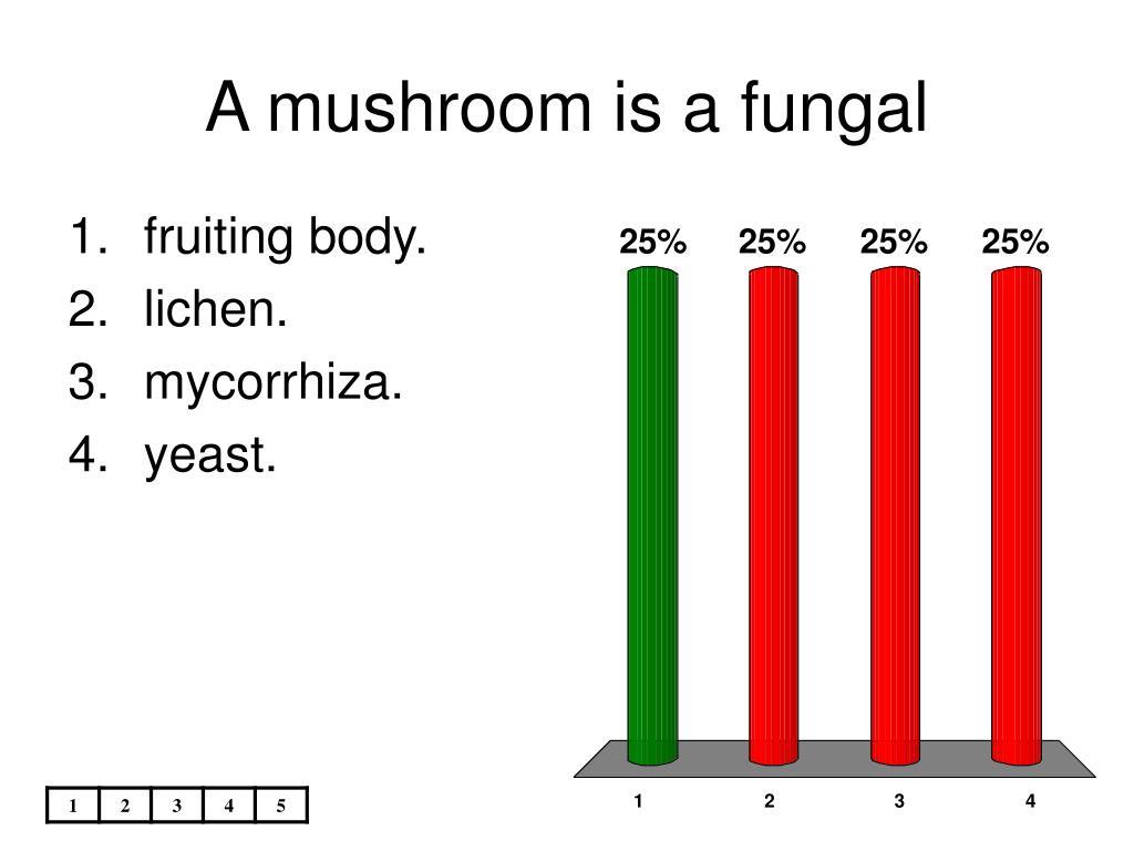 A mushroom is a fungal