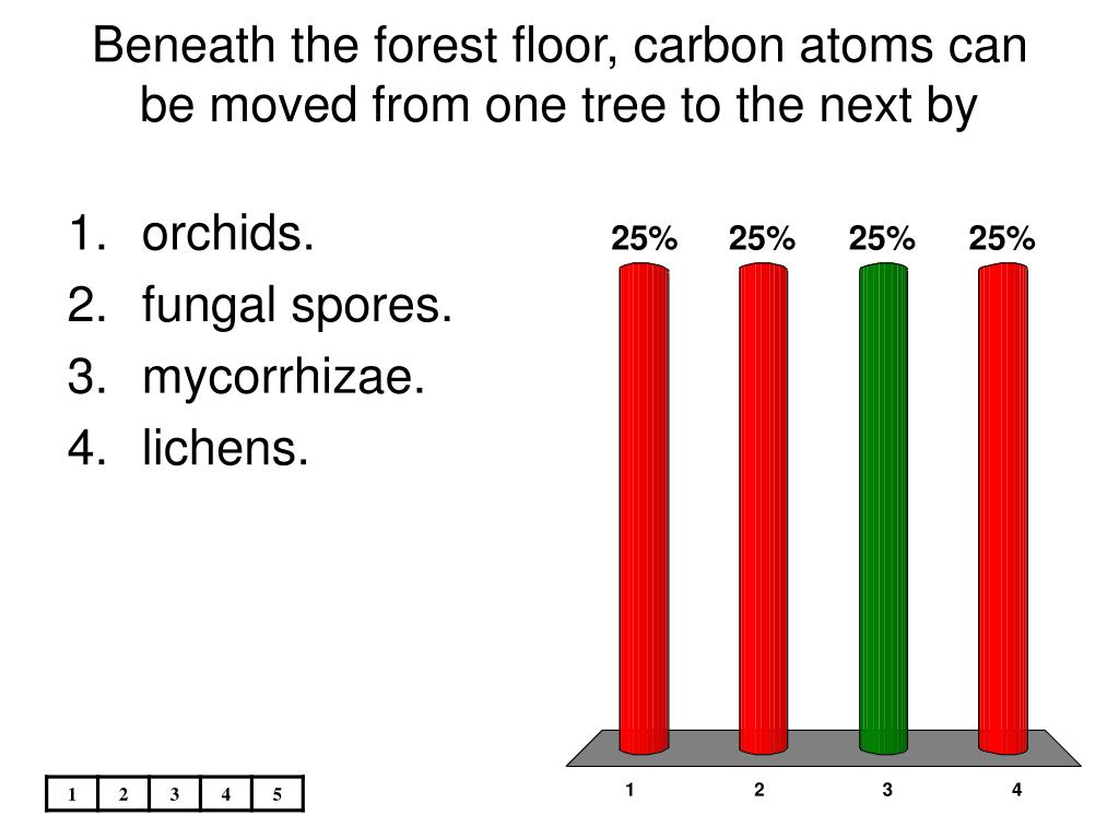 Beneath the forest floor, carbon atoms can be moved from one tree to the next by