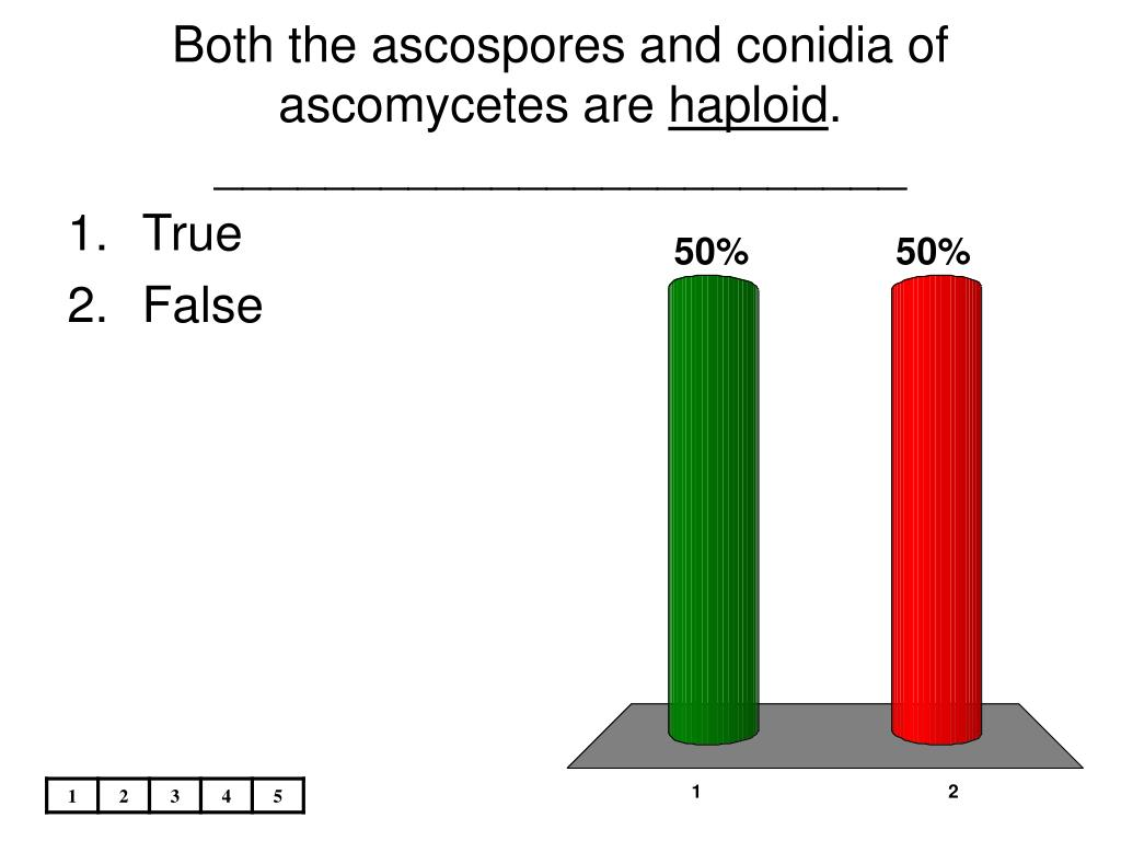 Both the ascospores and conidia of ascomycetes are
