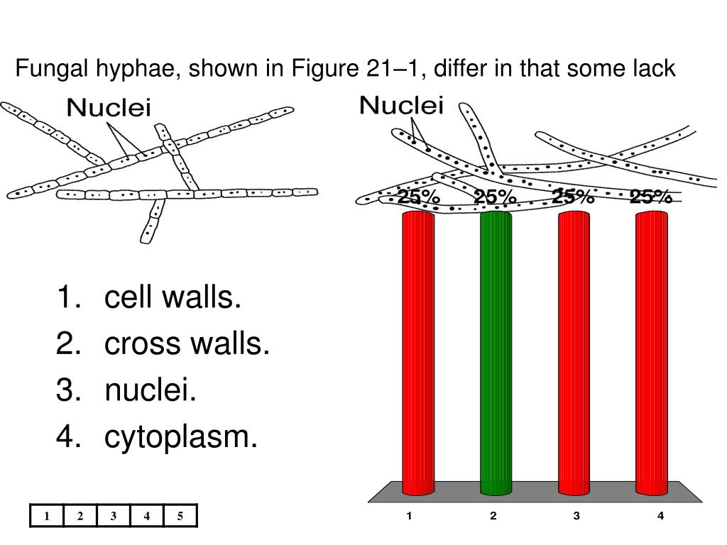 Fungal hyphae, shown in Figure 21–1, differ in that some lack