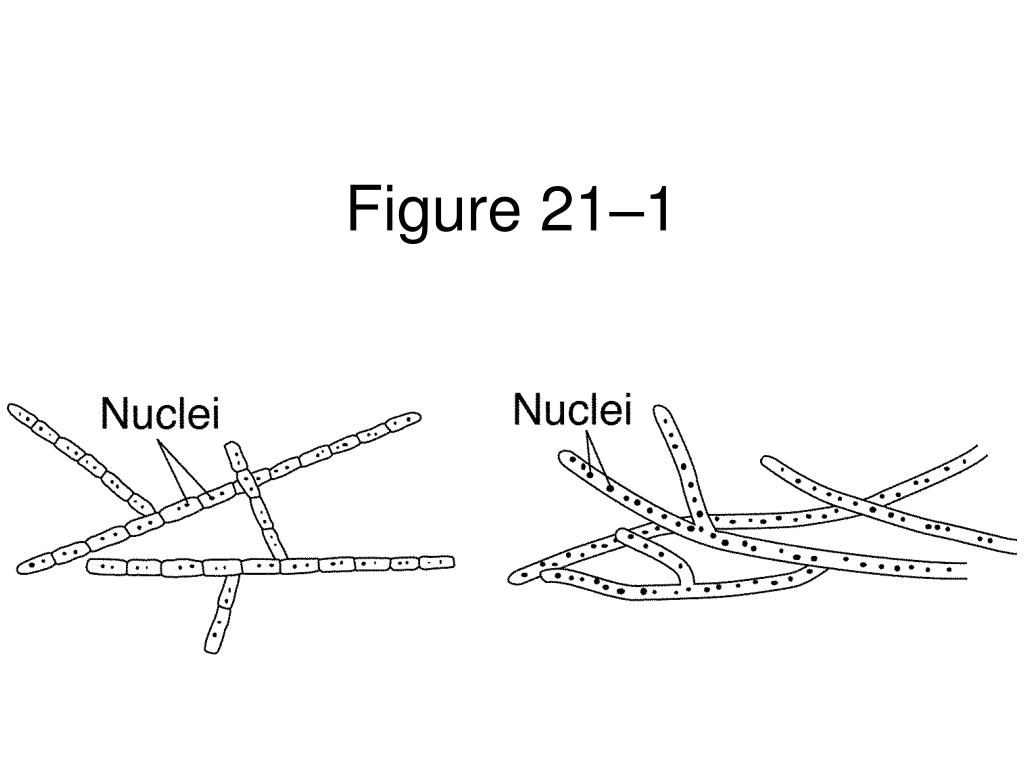 Figure 21–1
