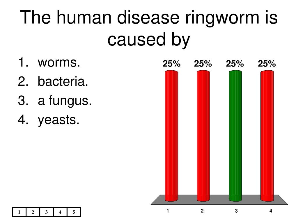 The human disease ringworm is caused by