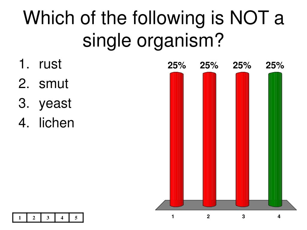 Which of the following is NOT a single organism?