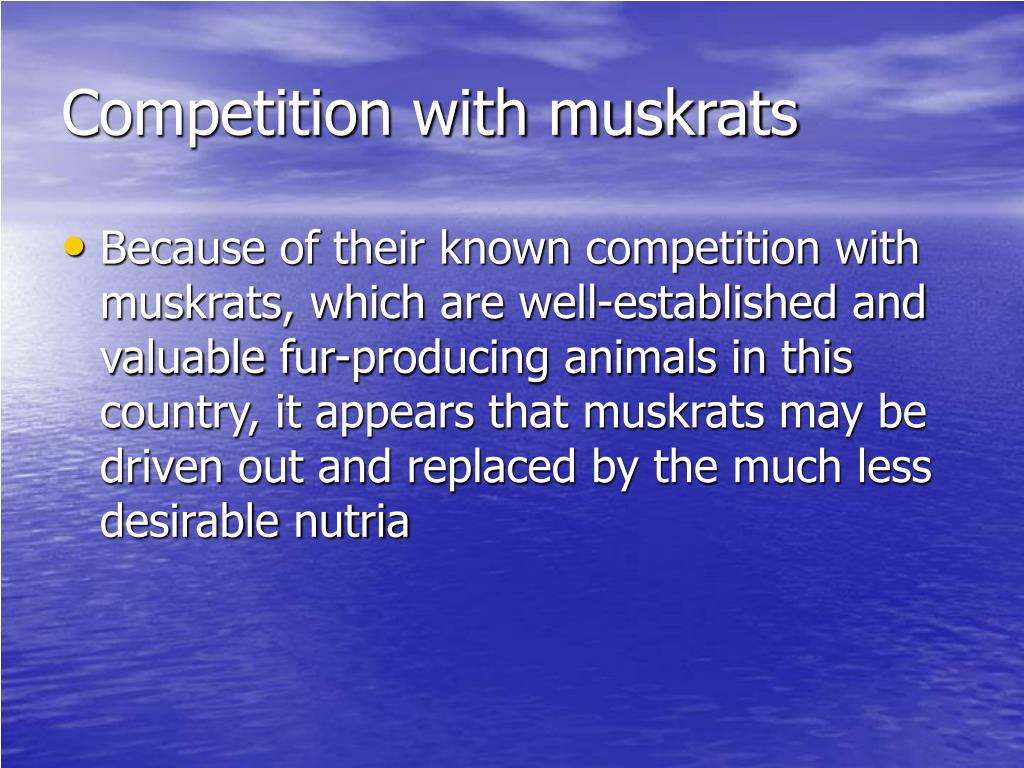 Competition with muskrats