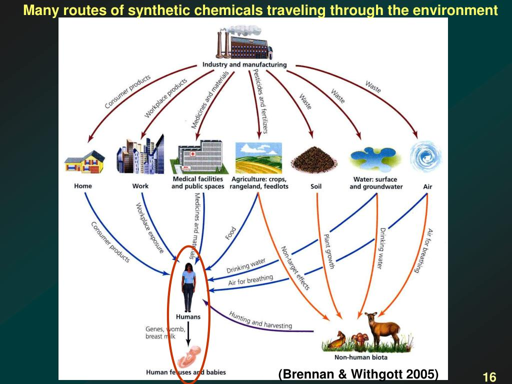 Many routes of synthetic chemicals traveling through the environment