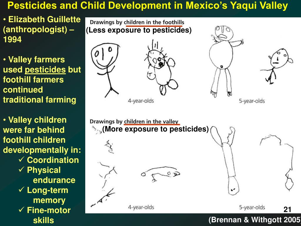 Pesticides and Child Development in Mexico's Yaqui Valley