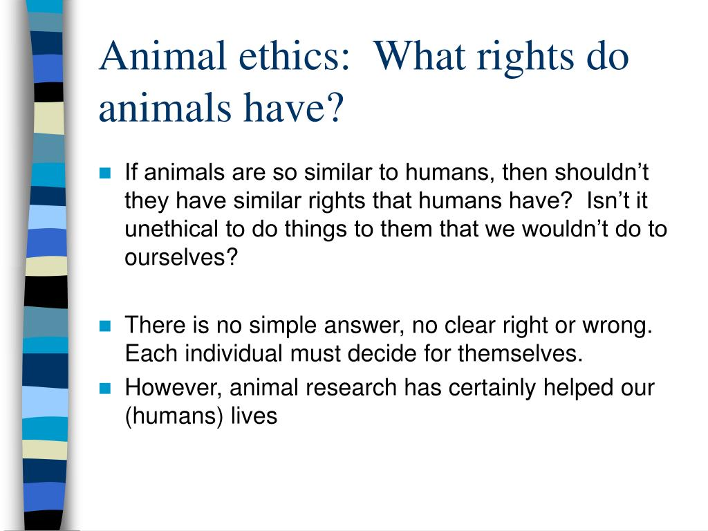 ethics animal rights essay