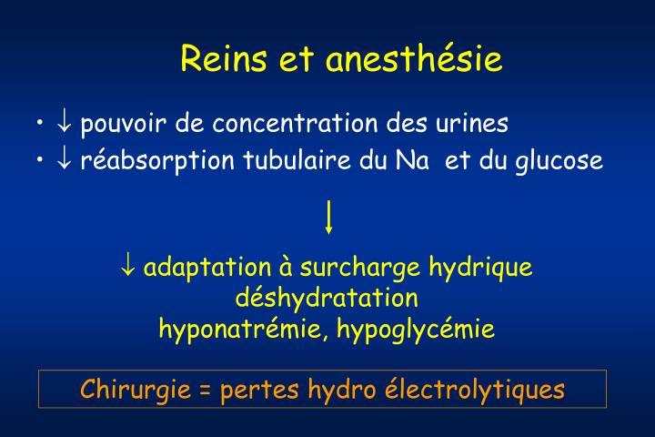 Reins et anesthésie