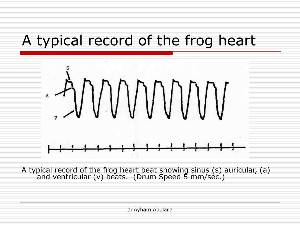 Cardiovascular Physiology and Diseases of Amphibians ...