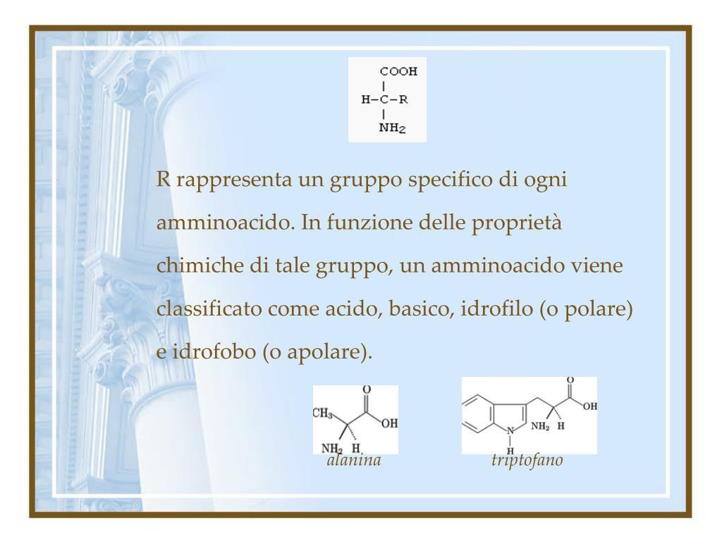 R rappresenta un gruppo specifico di ogni amminoacido. In funzione delle proprietà chimiche di tale gruppo, un amminoacido viene classificato come acido, basico, idrofilo (o polare) e idrofobo (o apolare).