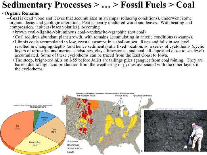 Sedimentary Processes > … > Fossil Fuels > Coal