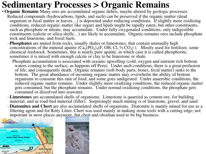 Sedimentary Processes > Organic Remains