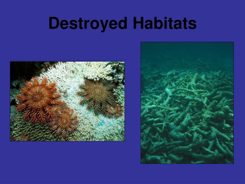 Destroyed Habitats