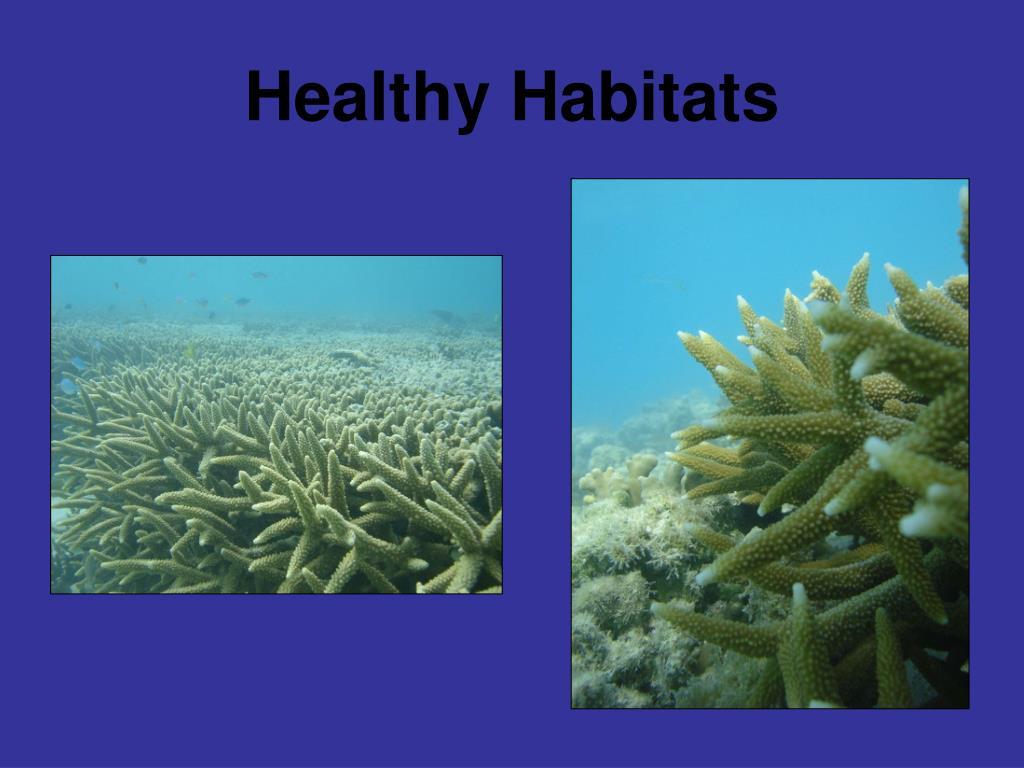 Healthy Habitats