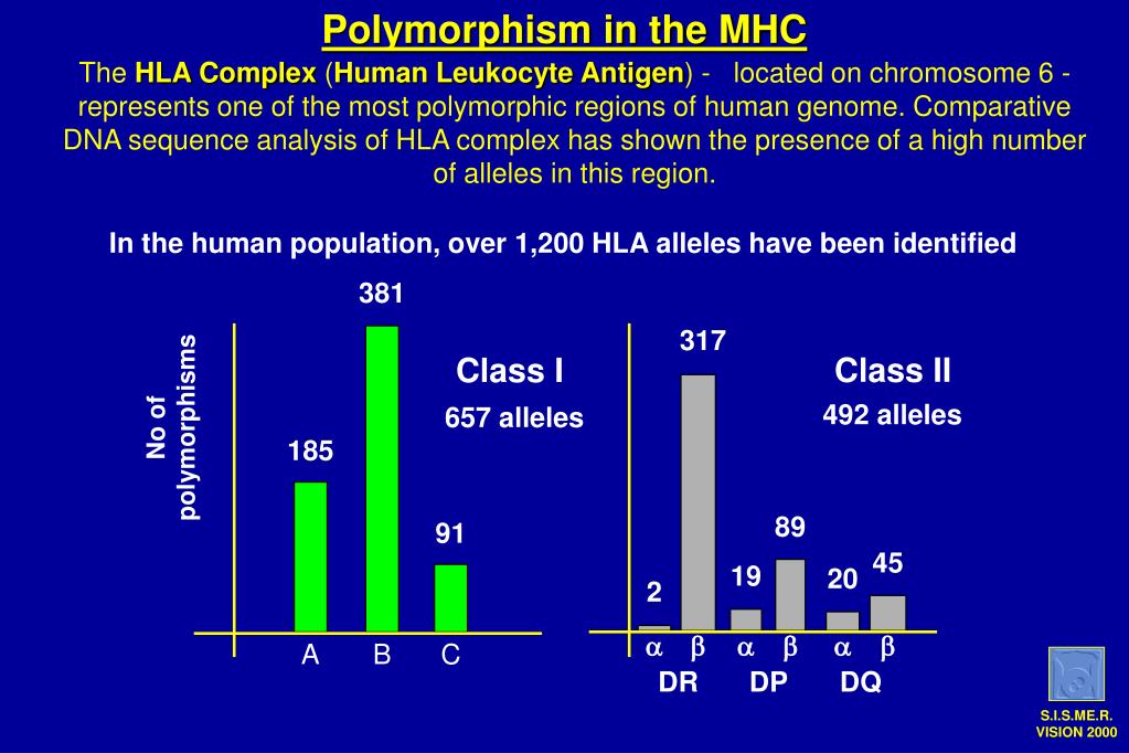 Polymorphism in the MHC