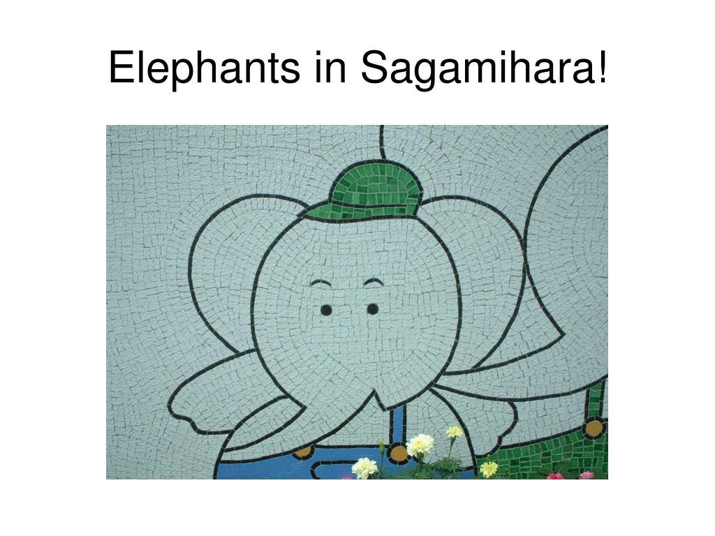 Elephants in Sagamihara!