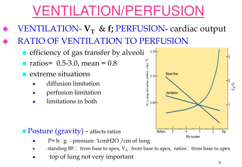 Ventilation Perfusion Ratio : Ppt ventilation perfusion gas exchange powerpoint