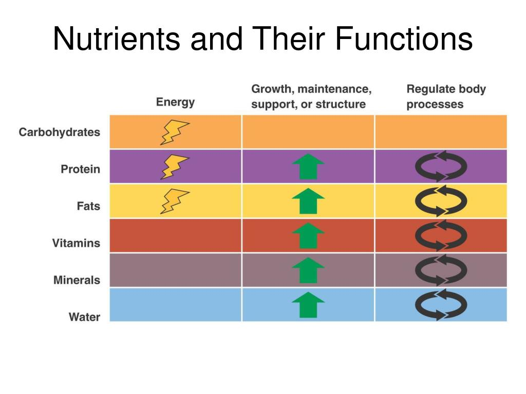Nutrients and Their Functions