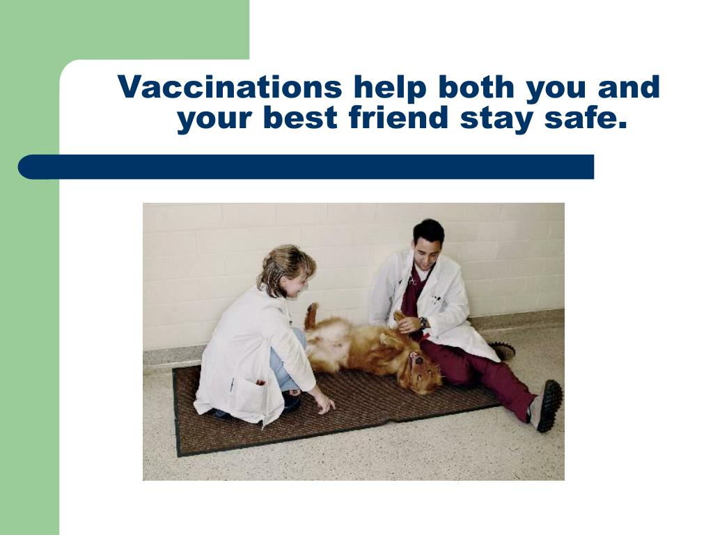 Vaccinations help both you and your best friend stay safe.