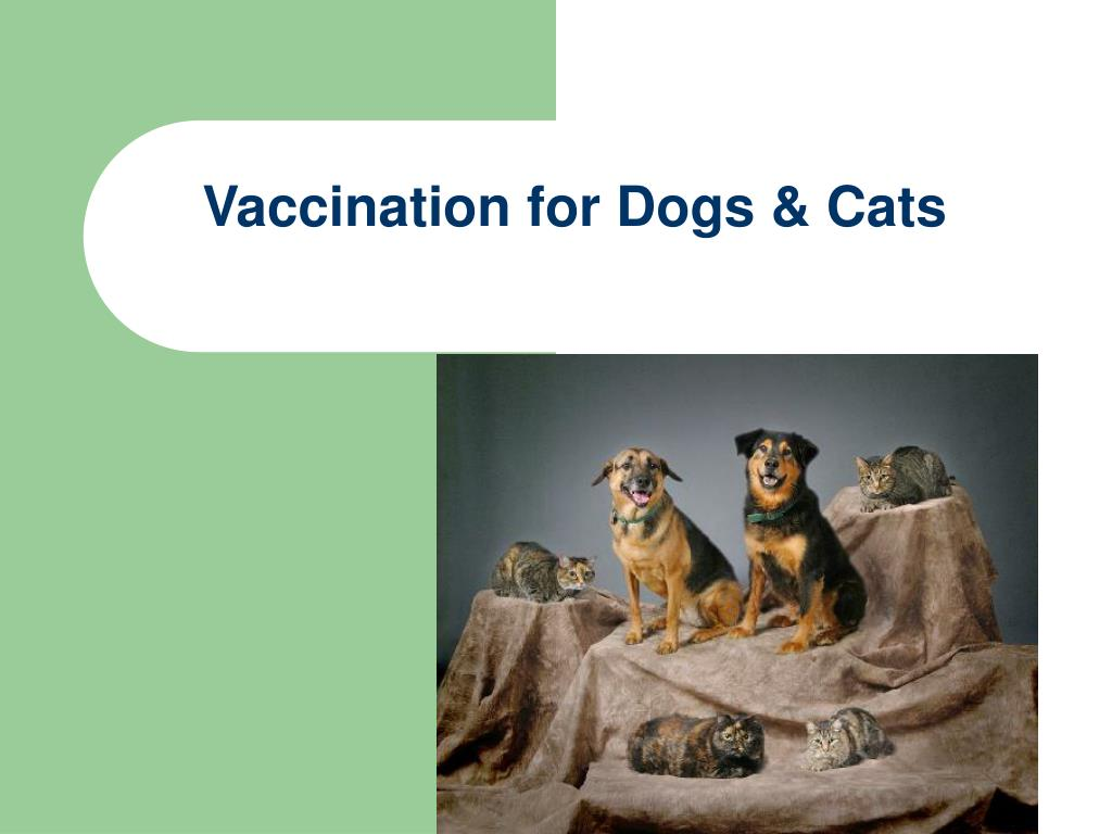 Vaccination for Dogs & Cats