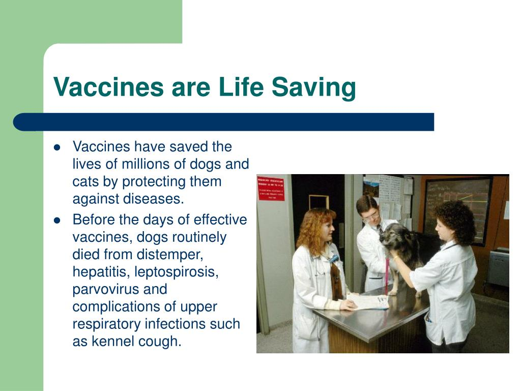 Vaccines have saved the lives of millions of dogs and cats by protecting them against diseases.