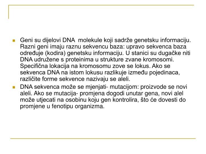 Geni su dijelovi DNA  molekule koji sadrže genetsku informaciju. Razni geni imaju raznu sekvencu baza: upravo sekvenca baza određuje (kodira) genetsku informaciju. U stanici su dugačke niti DNA udružene s proteinima u strukture zvane kromosomi. Specifična lokacija na kromosomu zove se lokus. Ako se sekvenca DNA na istom lokusu razlikuje između pojedinaca, različite forme sekvence nazivaju se aleli.
