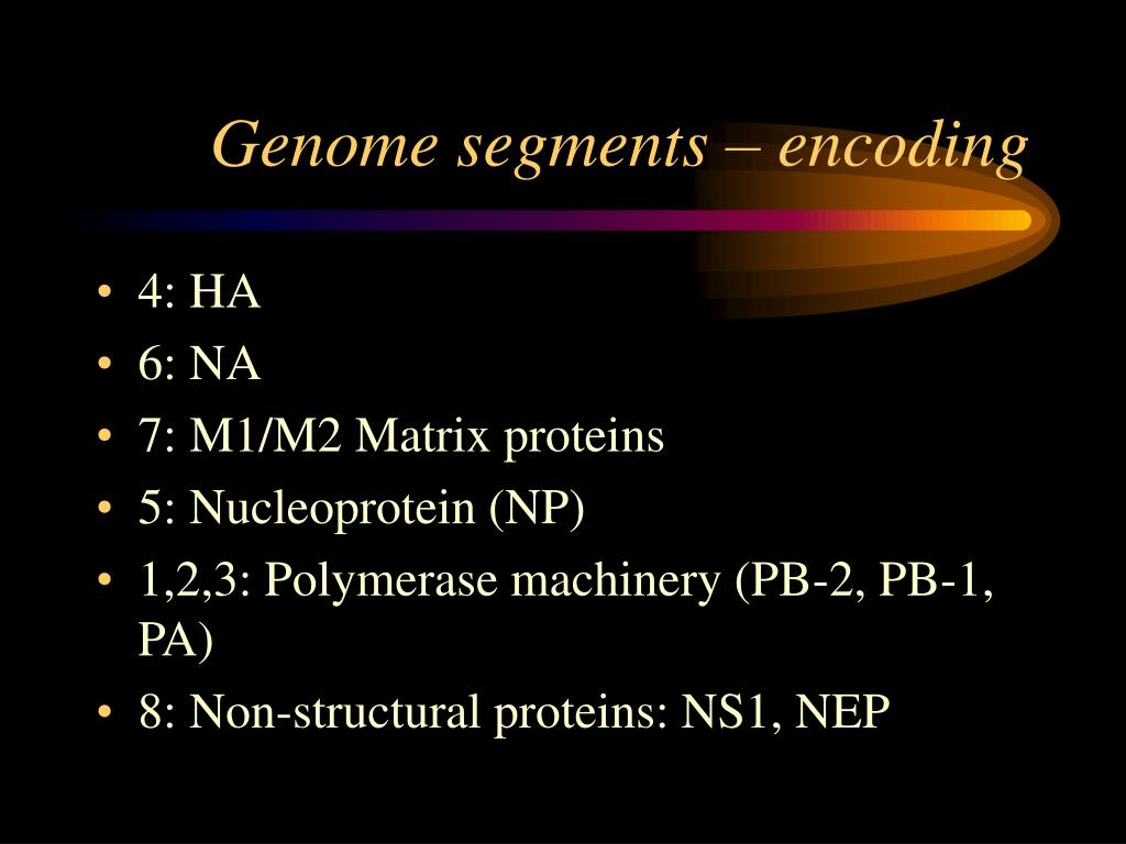 Genome segments – encoding