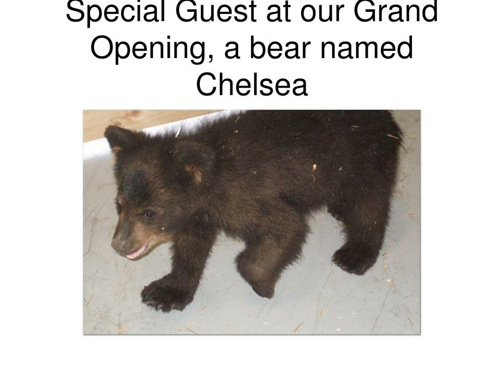 Special Guest at our Grand Opening, a bear named Chelsea