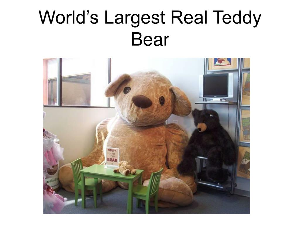 World's Largest Real Teddy Bear