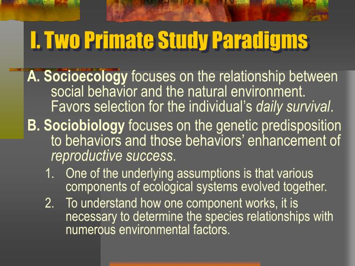 I two primate study paradigms