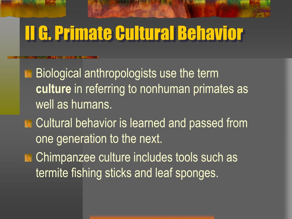 II G. Primate Cultural Behavior