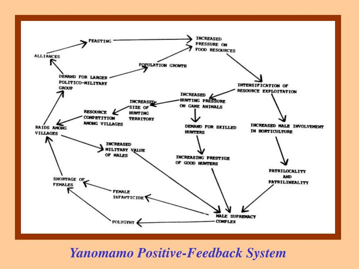 Yanomamo Positive-Feedback System