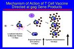 mechanism of action of t cell vaccine directed at gag gene products