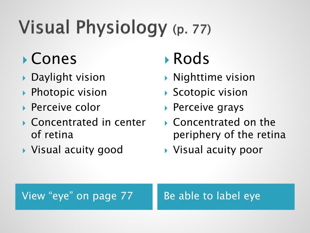 Visual Physiology