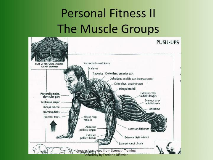 Personal fitness ii the muscle groups l.jpg