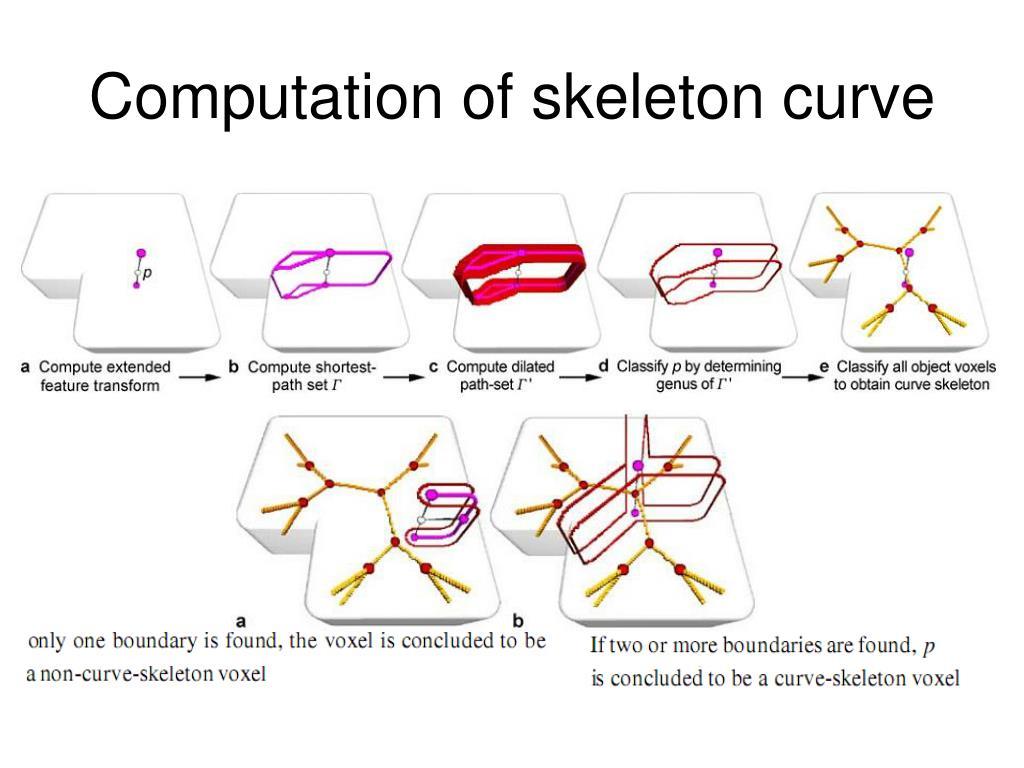 Computation of skeleton curve