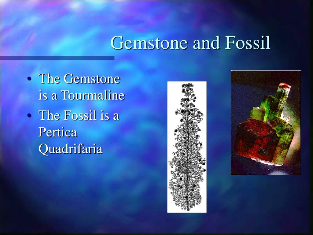 Gemstone and Fossil