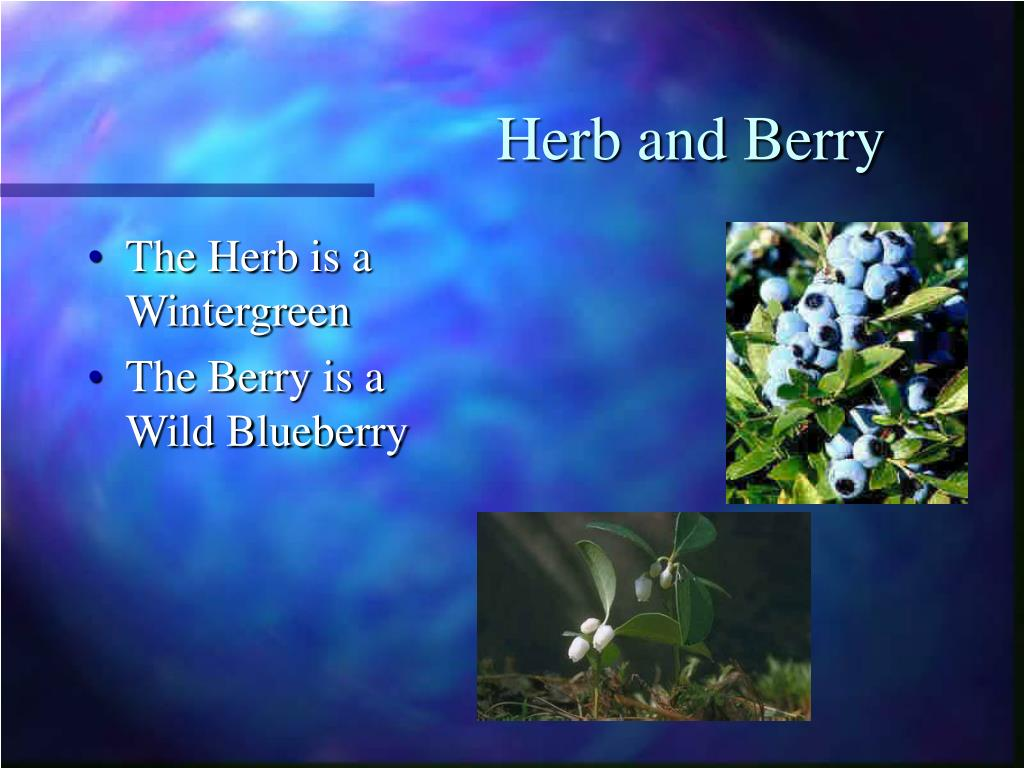 Herb and Berry