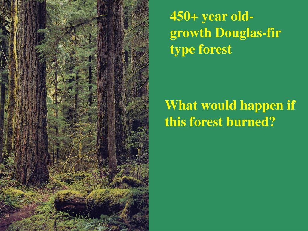 450+ year old-growth Douglas-fir type forest