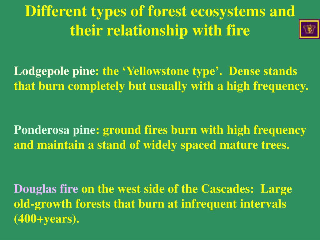 Different types of forest ecosystems and their relationship with fire
