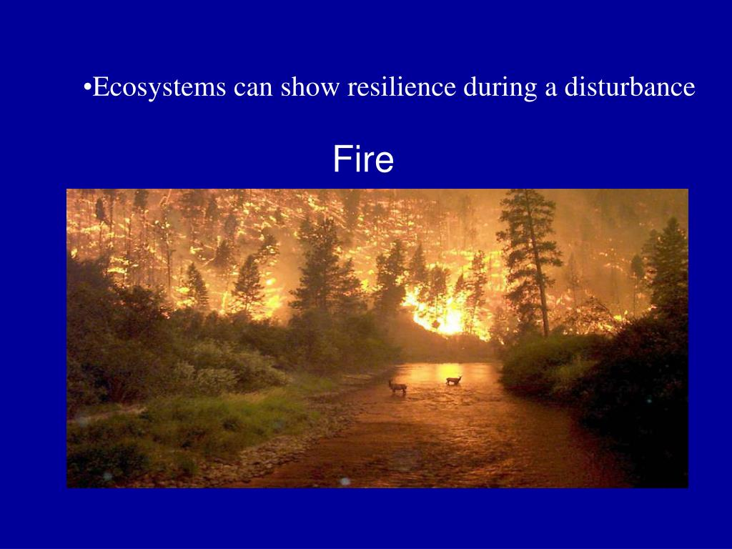 Ecosystems can show resilience during a disturbance
