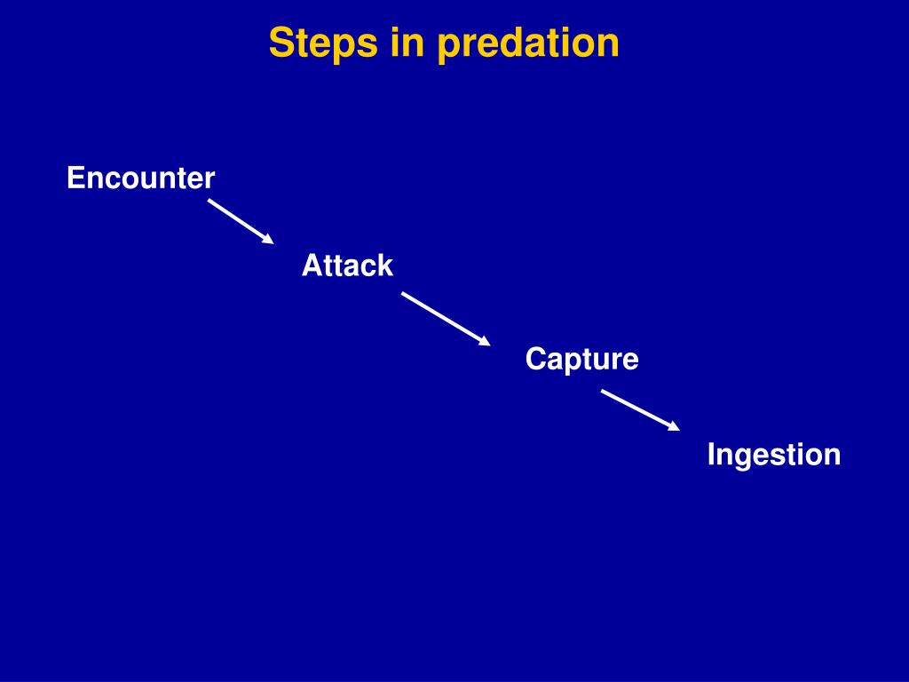 Steps in predation