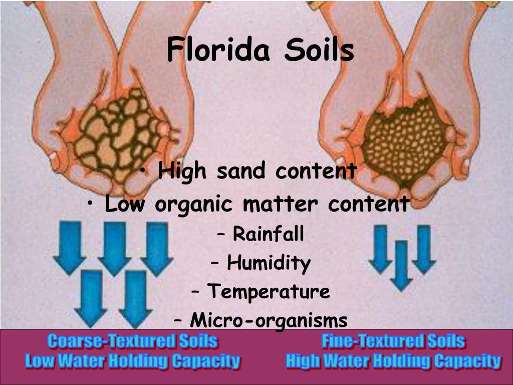 Florida Soils